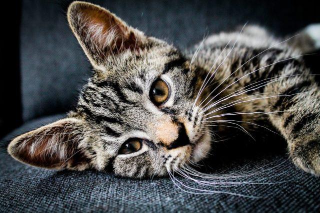 猫の分離不安症の原因