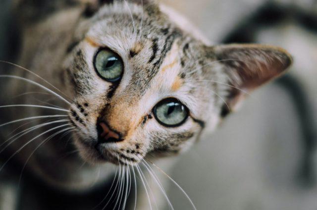猫が分離不安症にならないための対策