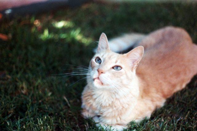 猫がしつこくついてくる場合に考えられること