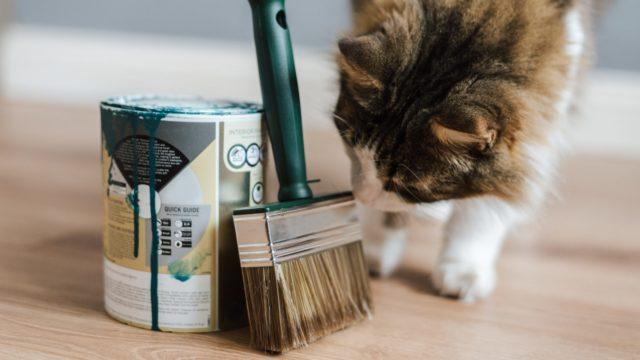 猫のお世話の頻度