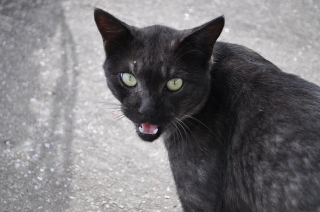 猫の様々な鳴き声
