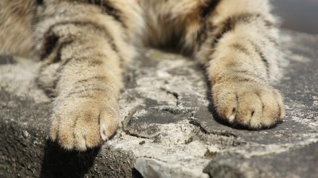 猫の手も借りたいの語源