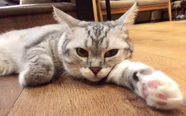 「猫の手も借りたい」とはどういう意味なのか?