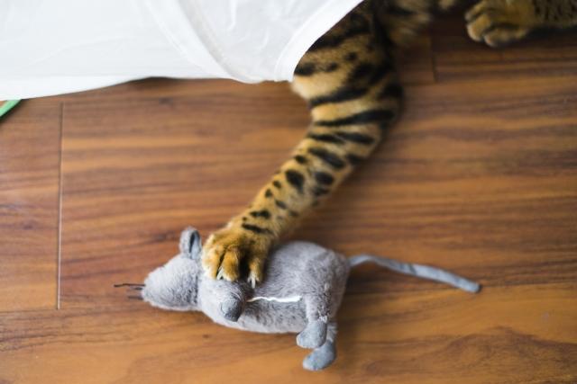 「窮鼠猫を噛む」の類語