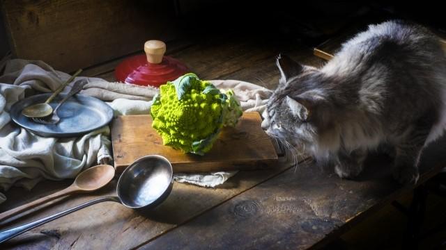 猫も杓子も