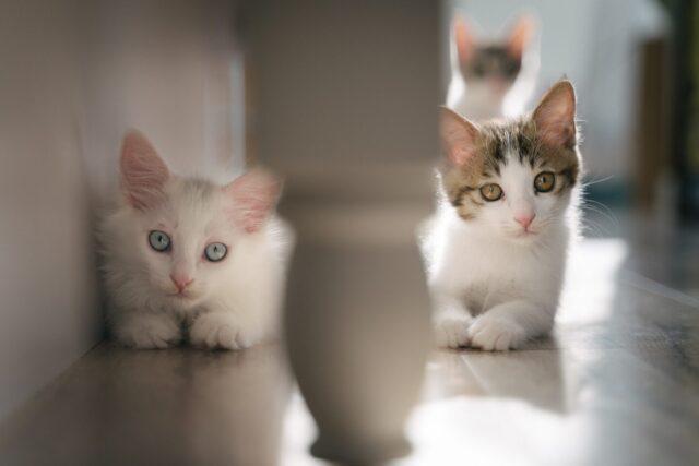 「猫も杓子も」とはどういう意味なのか?
