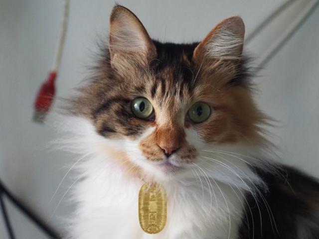 「猫に小判」とはどういう意味なのか?