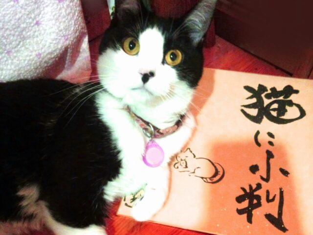 「猫に小判」の類義語