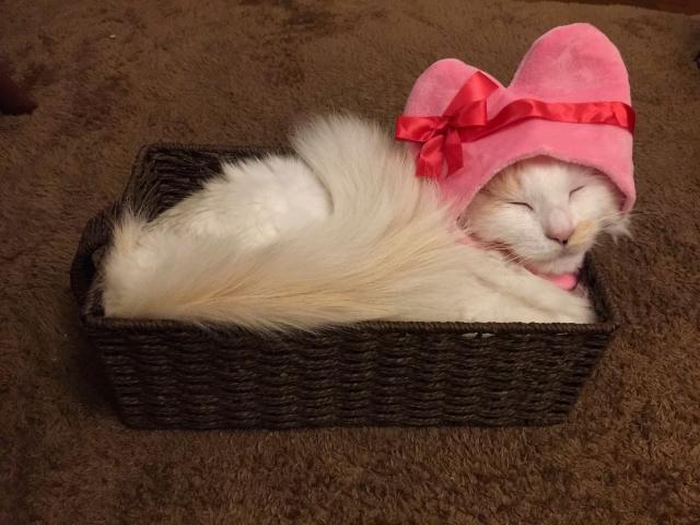 「猫をかぶる」の語源