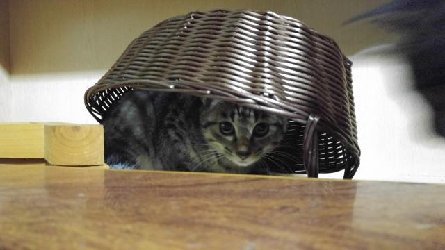 「猫をかぶる」の類義語